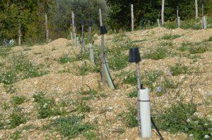 Impianto Quercus Tartufi con tubi Shelter