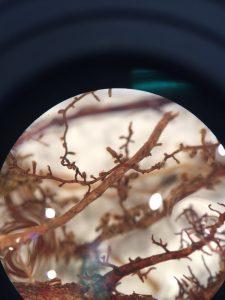 micorrizie Quercus Tartufi