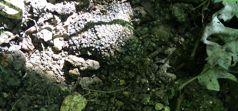 Piante Di Tartufo : Piante da tartufo micorrizate quercus tartufi